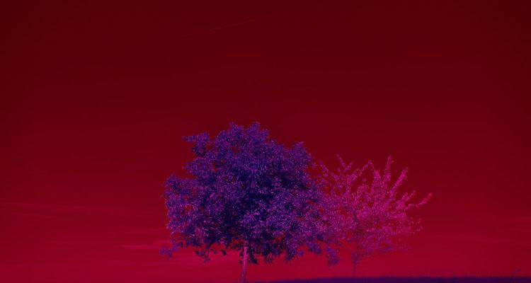 génétique des arbres - Hortus Focus