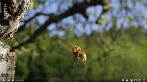 les insectes fascinants