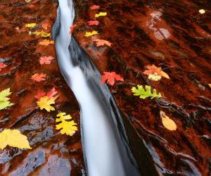 automne - Hortus Focus