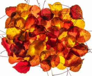 feuilles mortes - Hortus Focus