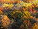 forêt automne - Hortus Focus