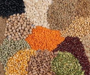 photo de une - pochette à graines
