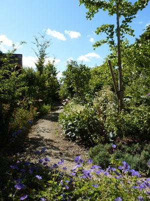 Jardin-du-Haut et Ginkgo Biloba