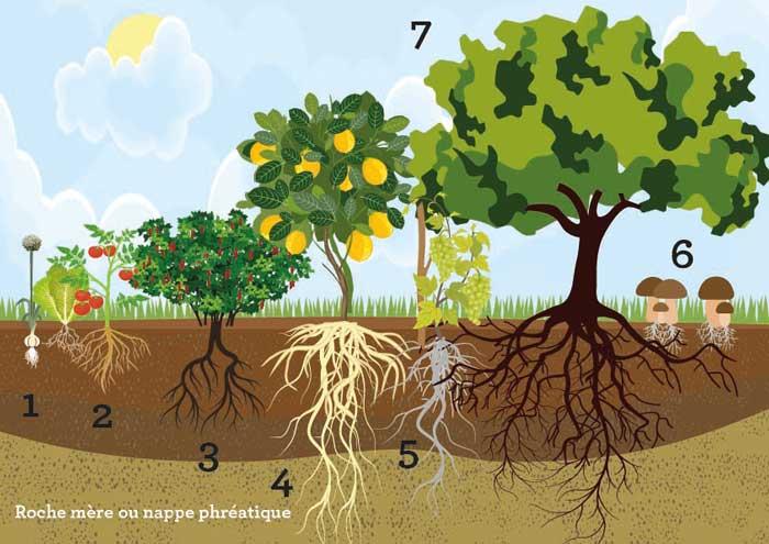 Forêt comestible : Schéma
