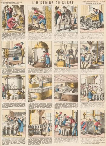 Histoire du sucre - Hortus Focus