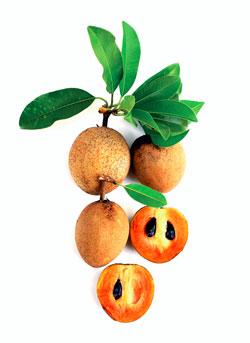 Fruits tropicaux - Sapotille