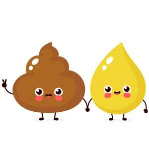 L'urine et les fèces