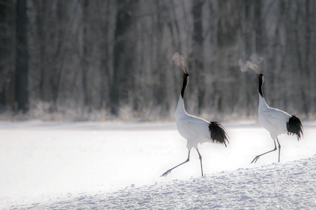 oiseaux dans le froid