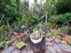 Jardin de l'Henry à Lunel
