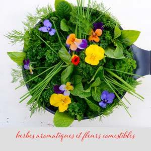 capucines, fleurs et aromatiques