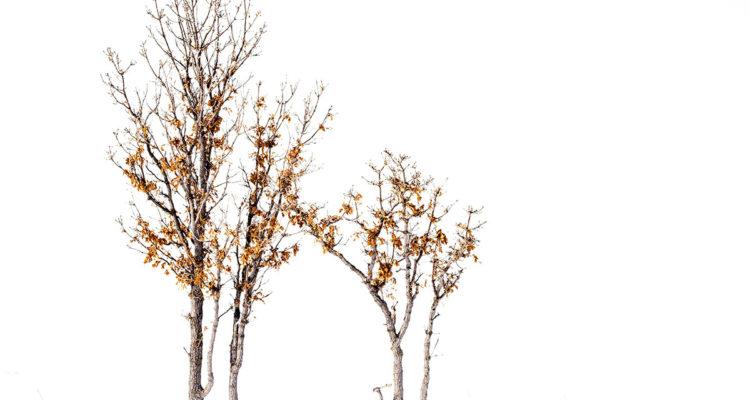 arbre dans neige