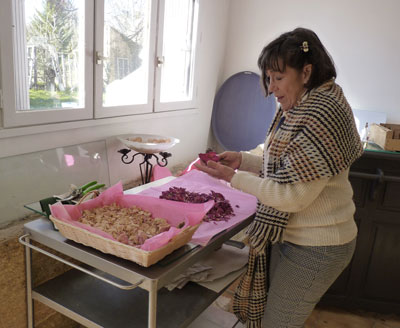 Rose Baptistine - Roseline Giorgis devant des pétales de rose