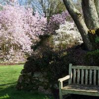 Magnolia - Jardin du Pellinec