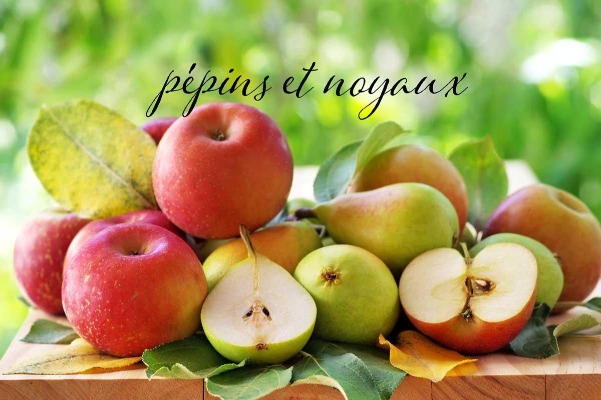 Germination : pommes et poires