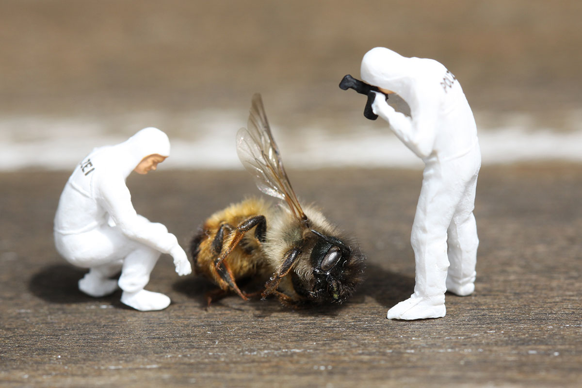 enquête sur abeille morte