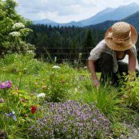 plantes belles et comestibles : femme au jardin