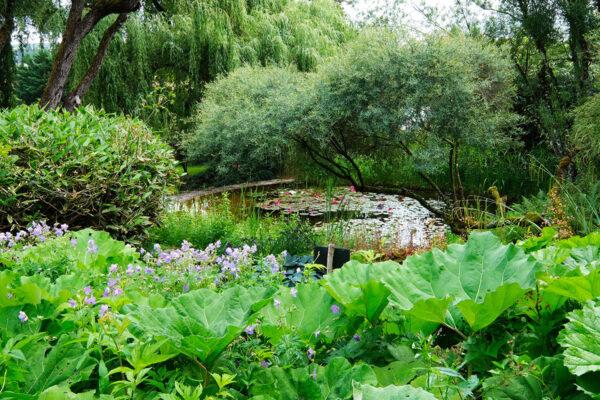 jardins aquatiques Acorus