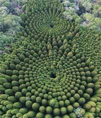forêt circulaire - Japon