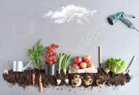 fruis et légumes