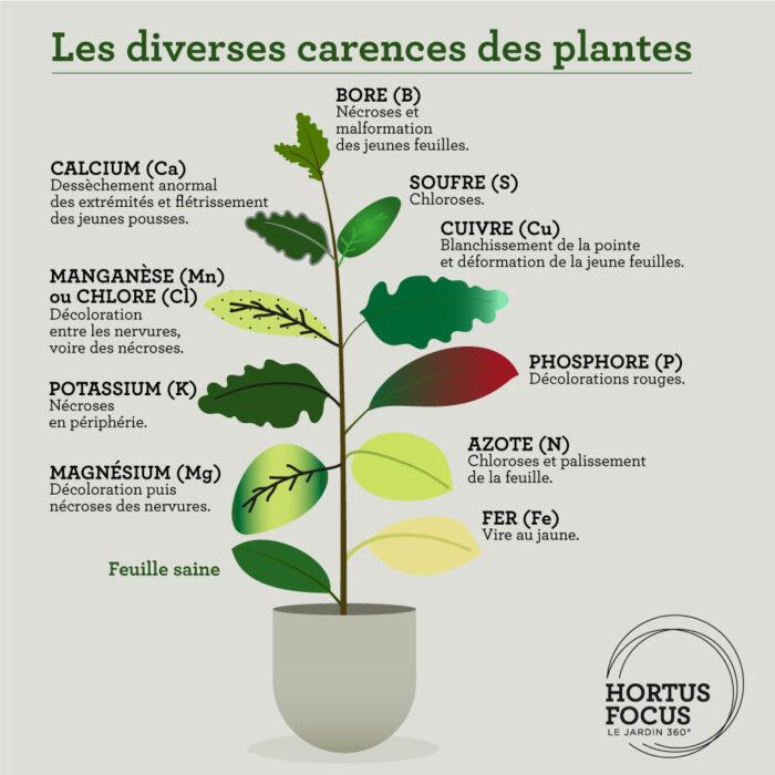 Les diverses carences des plantes