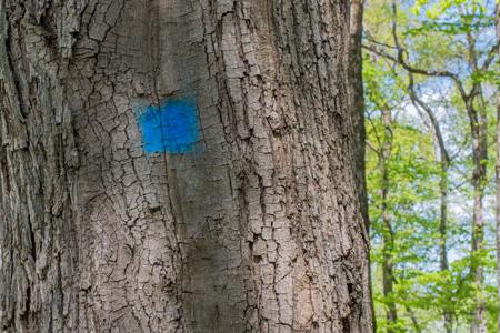 arbre marqué d'un point bleu