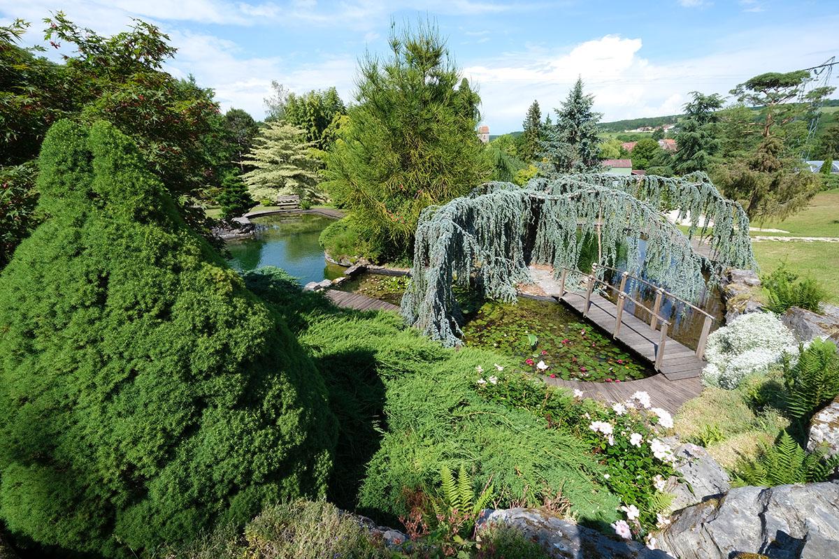 Jardin aquatiques Acorus