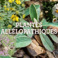 PLANTES ALLÉLOPATHIQUES