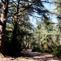 Forêt des Cèdres du Petit Luberon