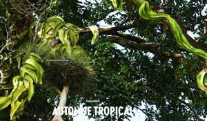 Automne Tropical