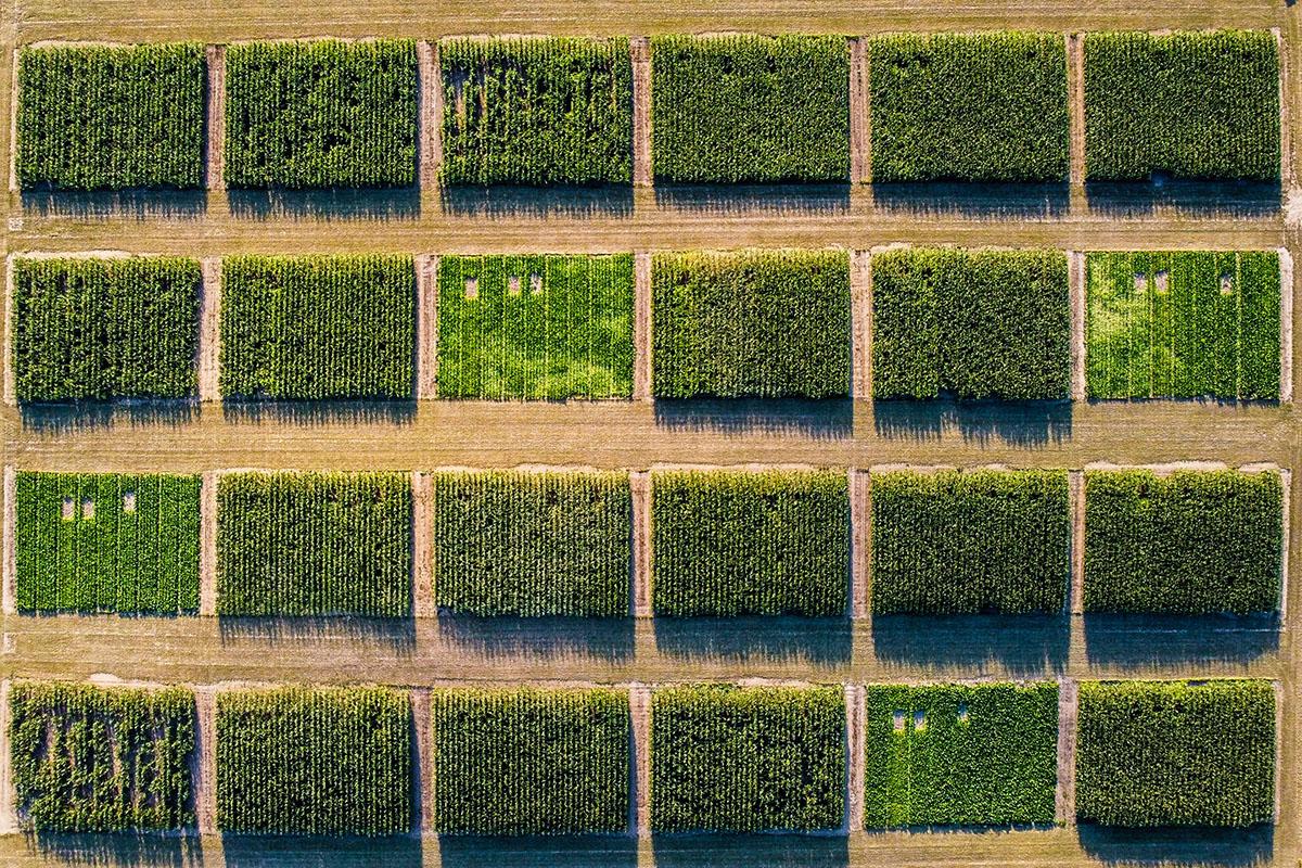 champs vus de drone