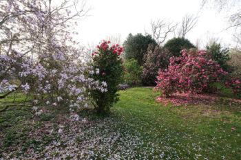 Courson au printemps