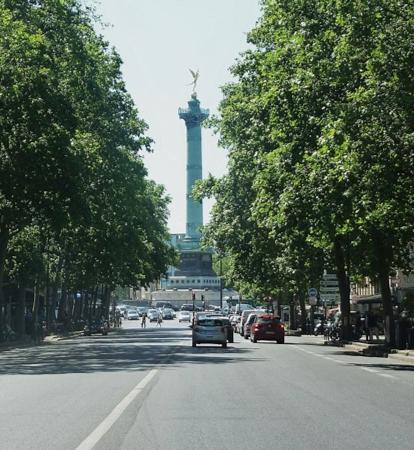 arbres à Paris