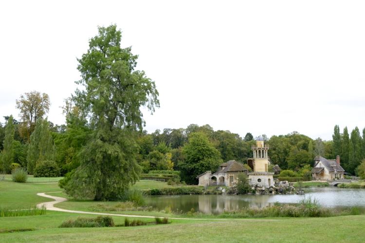 Taxodium distichum - Parc Versailles