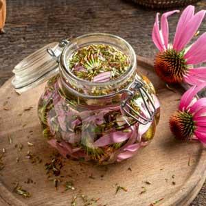 Echinacea : teinture mère