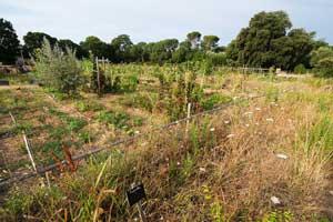 Permaculture à l'Oasis citadine