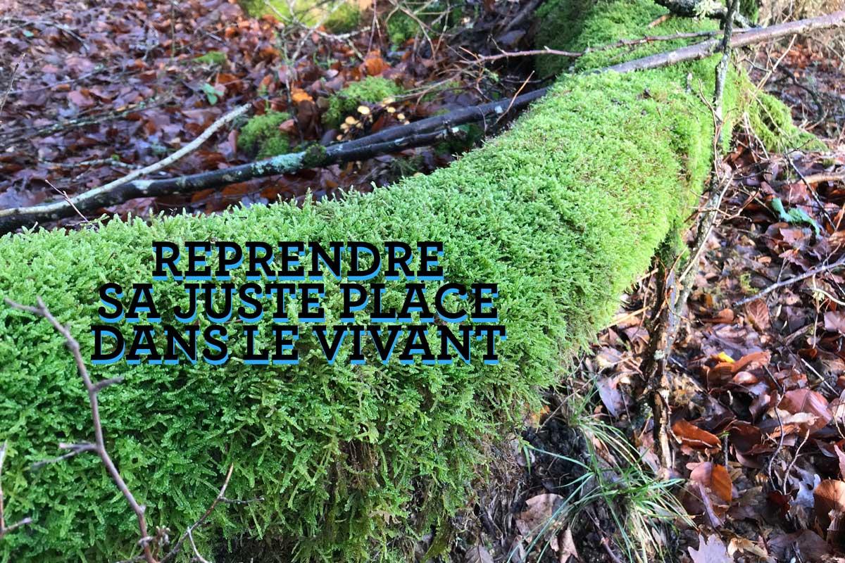 Forêt du Parc National du Morvan
