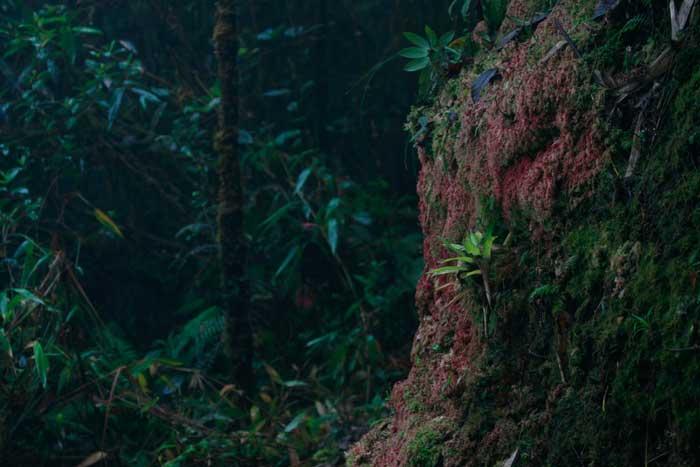 Forêt péruvienne