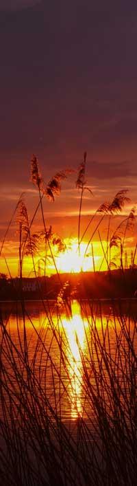 Roseaux et coucher de soleil