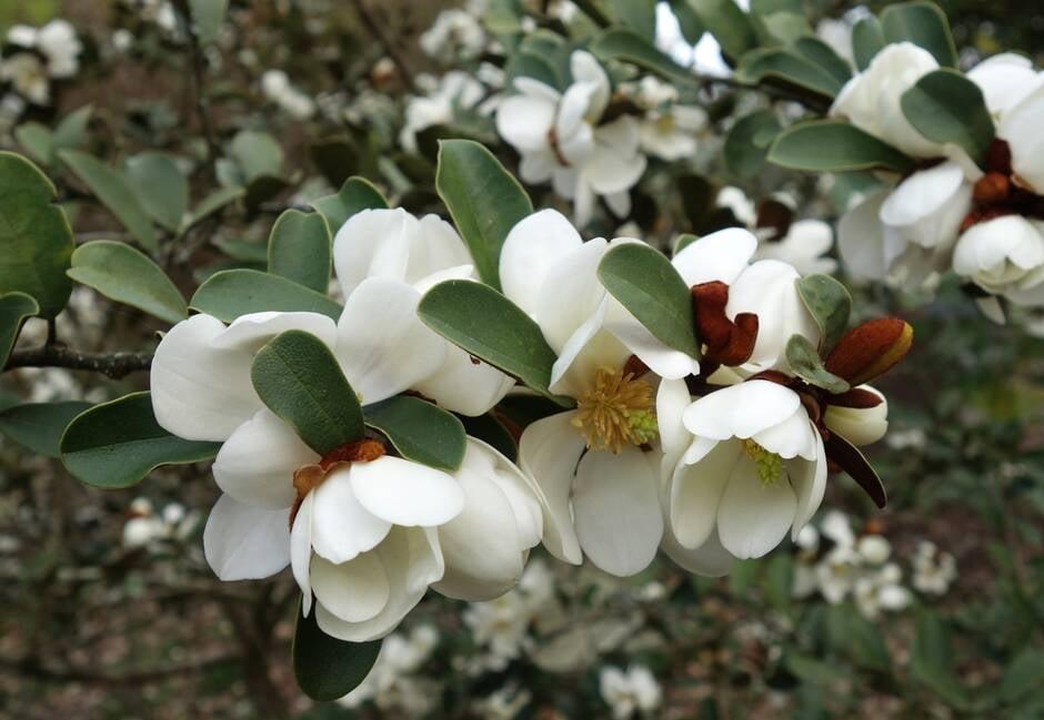 James Garnett nouveau magnolia