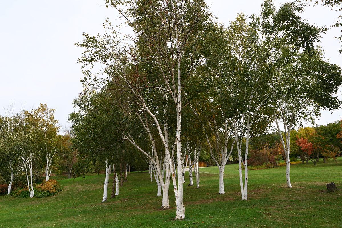 jardin du bois marquis