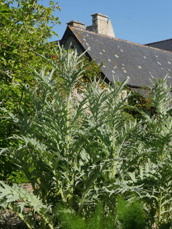 jardin du Presbytere©