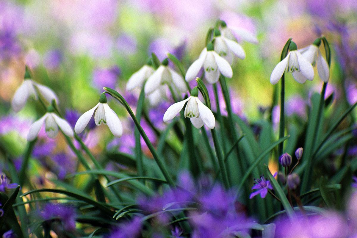 pour fleurir l'hiver et le printemps