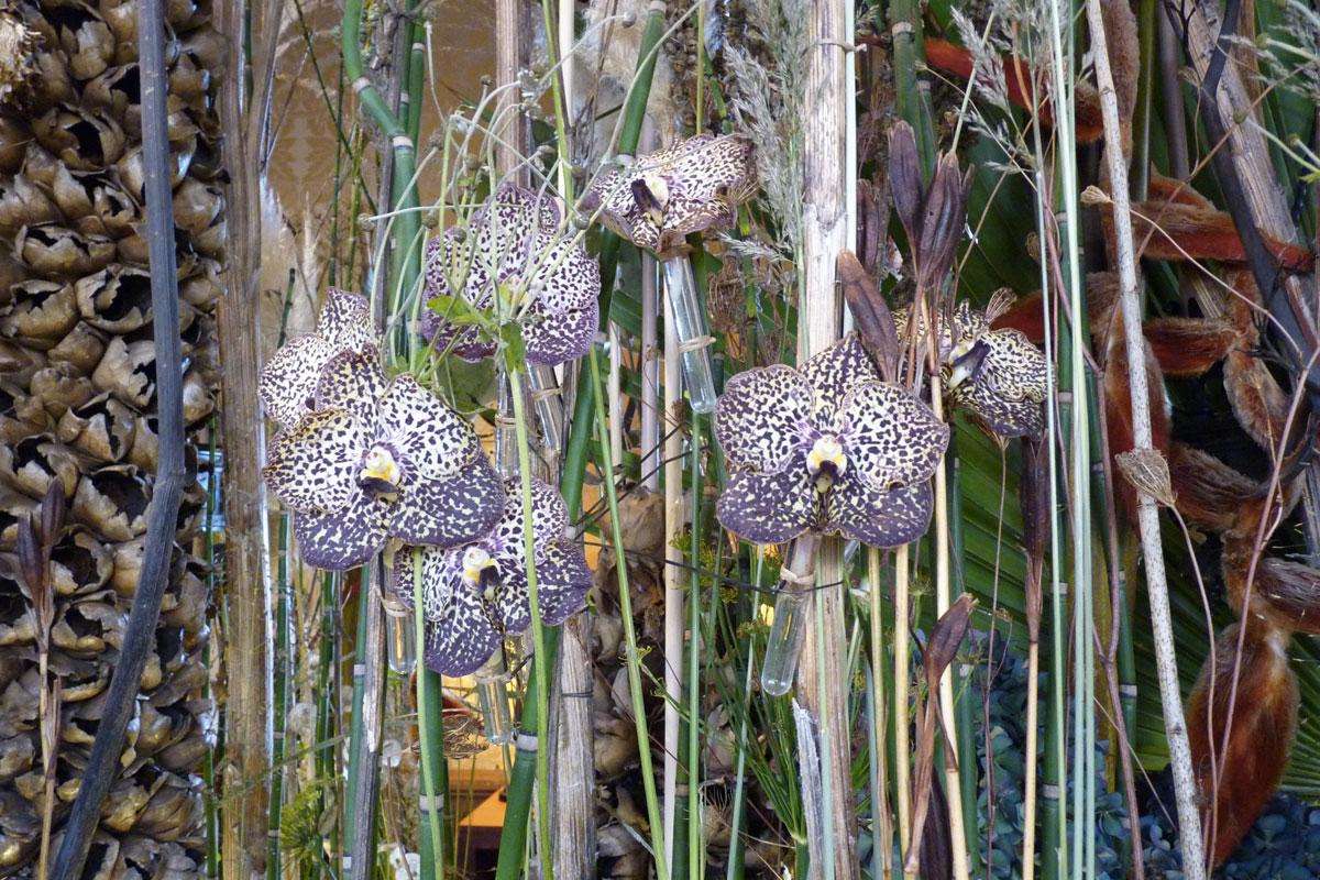 Orchidées, Frédéric Dupré