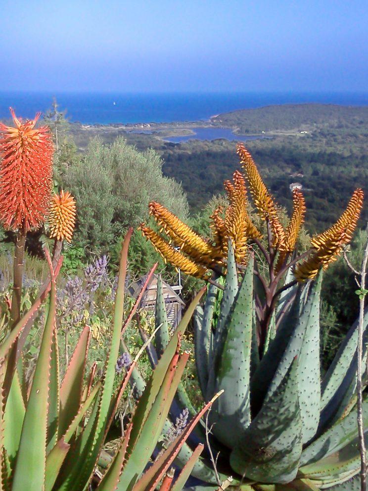 Aloe et vue sur la Méditerranée !!