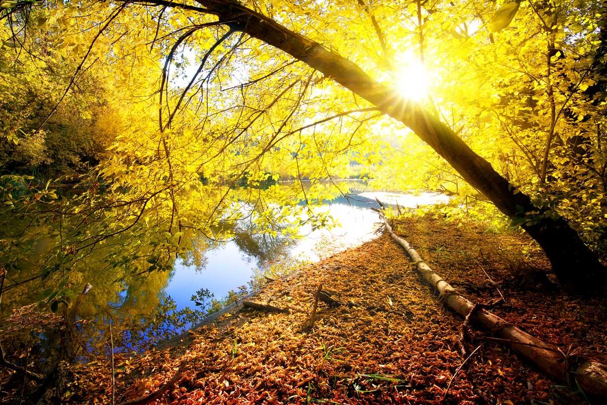 Bois en automne - ©Givaga