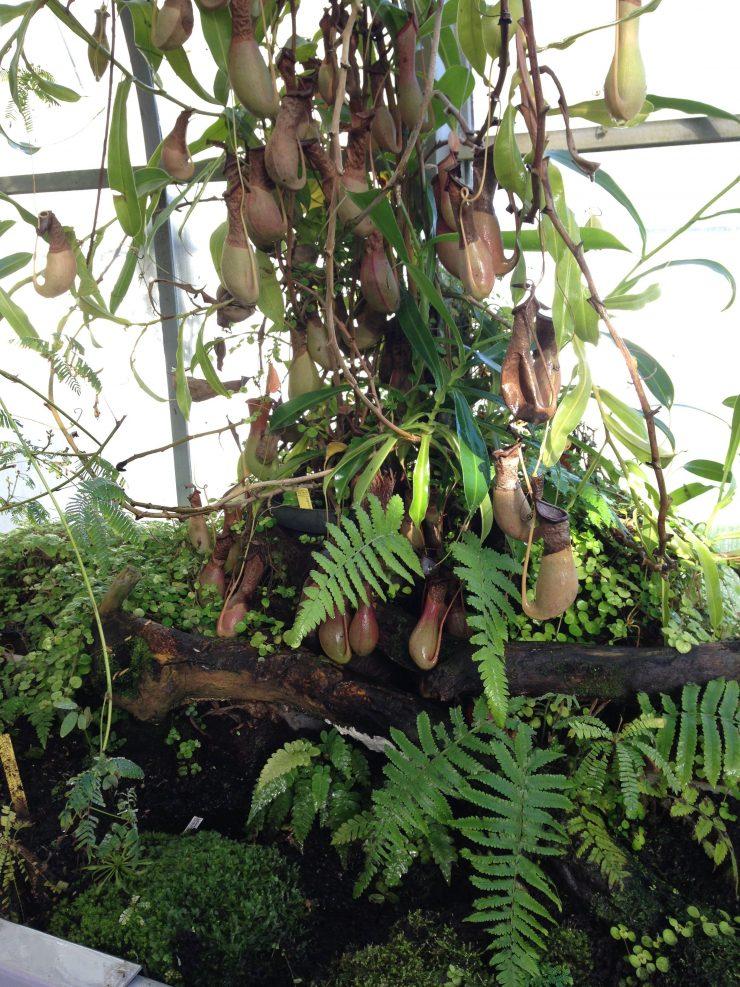 La serre tropicale du Jardin Botanique de Nantes  Hortus ...