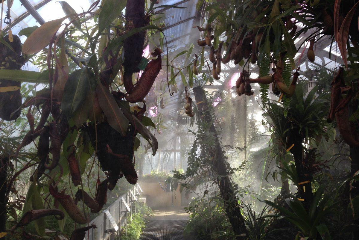 Jardin des Plantes de Nantes : Serre Tropicale