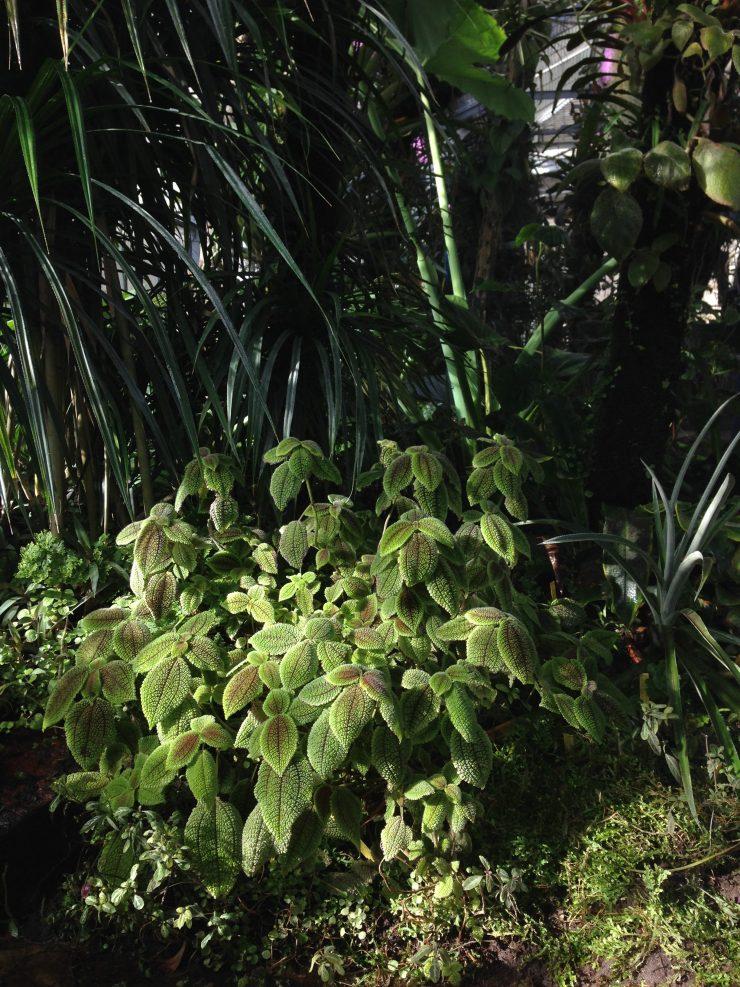 Serre Tropicale Jardin des Plantes de Nantes. ©Fabrice Chollet
