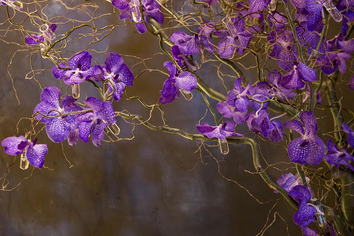 Orchidées pour un mariage suédois
