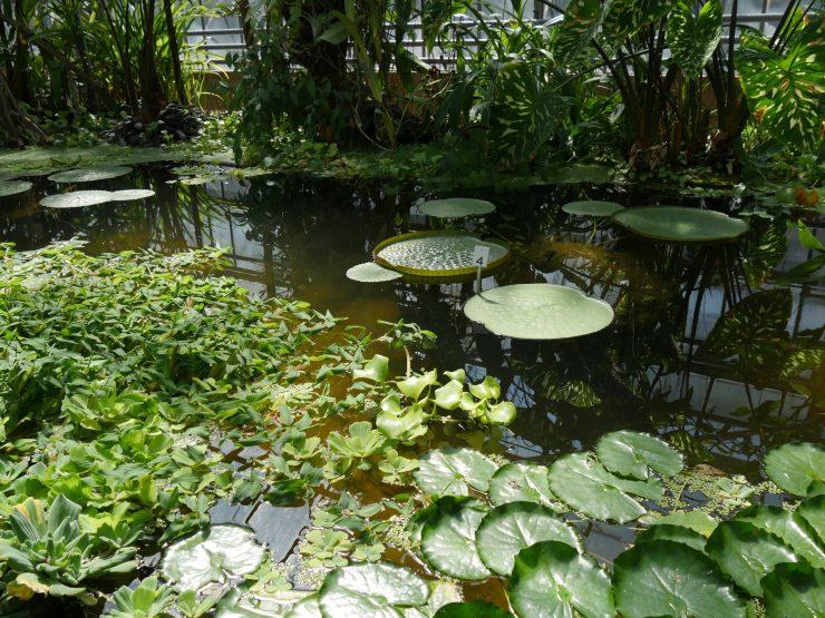 Jardin botanique JM Pelt Nancy